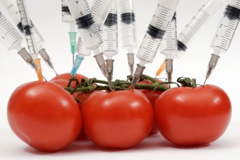genetically-modified-foodtomatoes